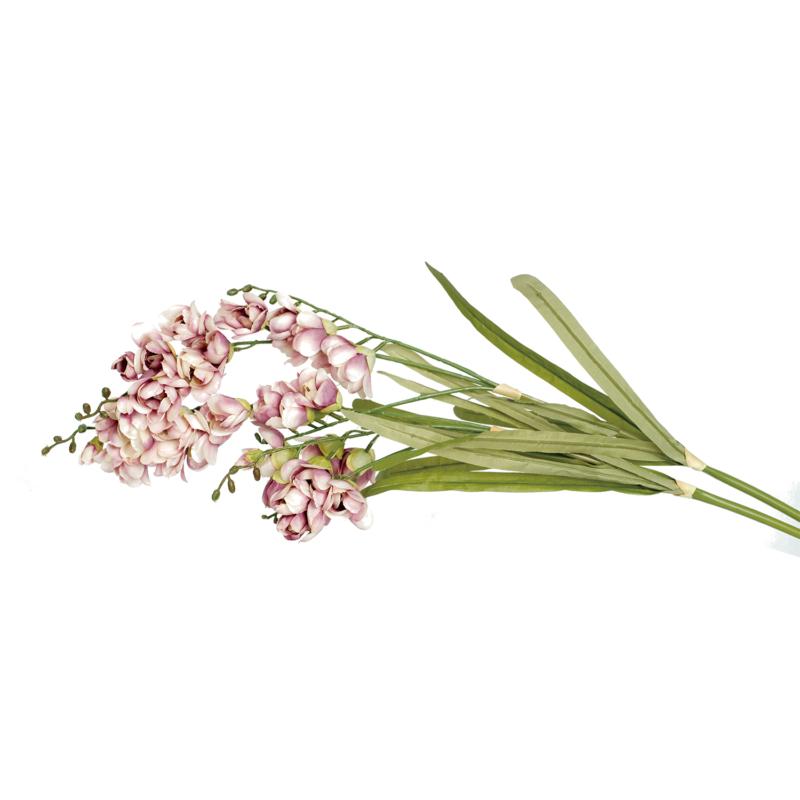 Orchidea - szálas
